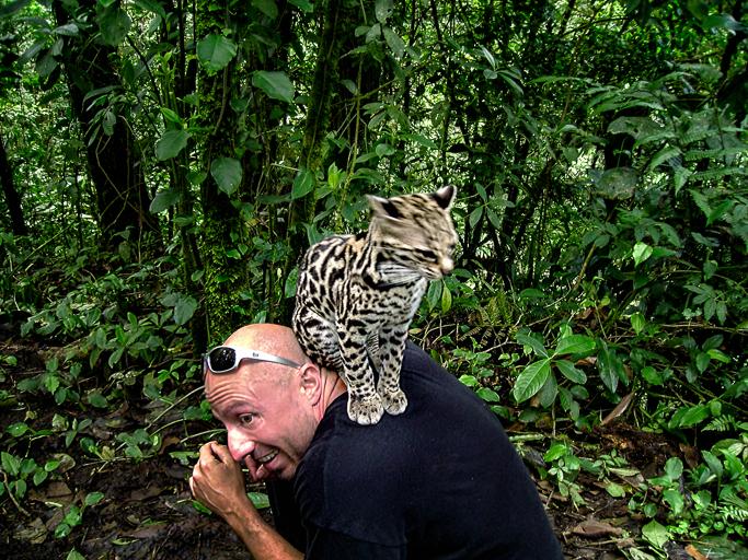 Costa Rica Ocelot